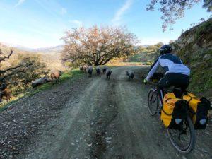 viaggio in bici gravel maiali